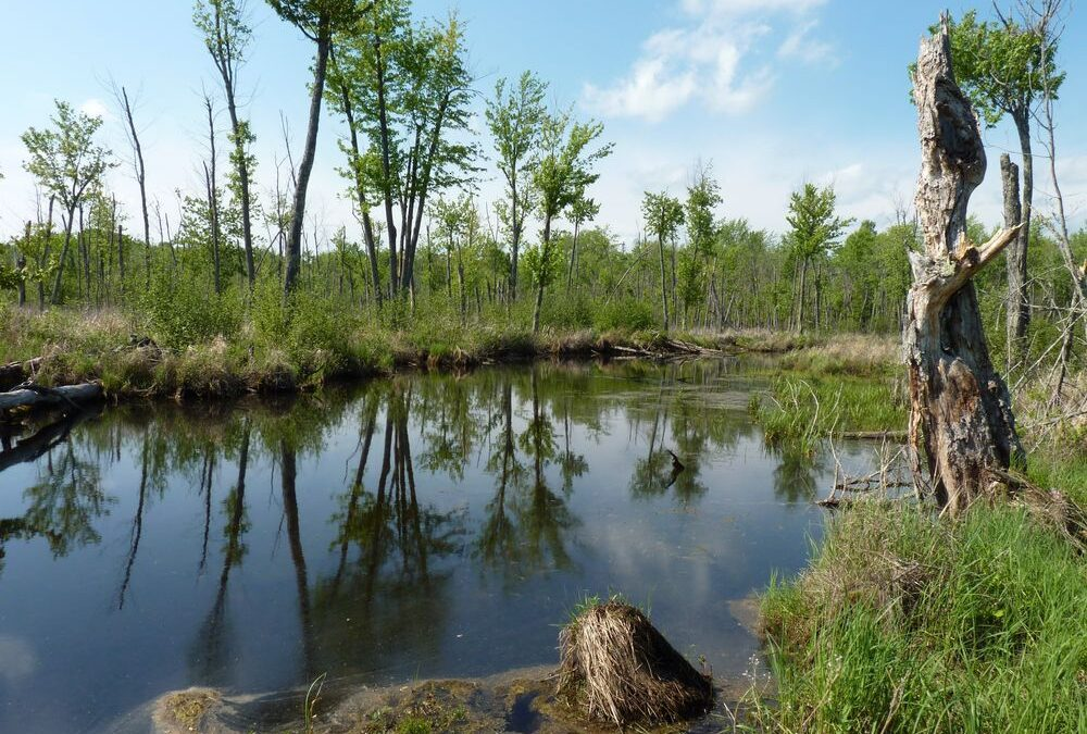 Byrne Big Creek Nature Preserve