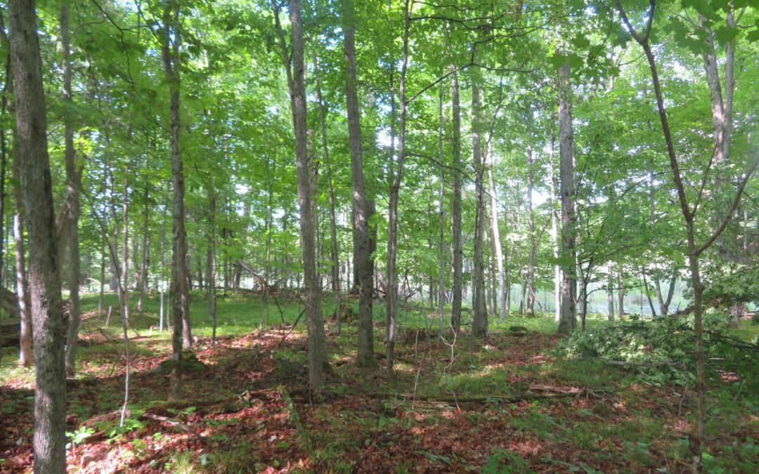 Salamander Forest