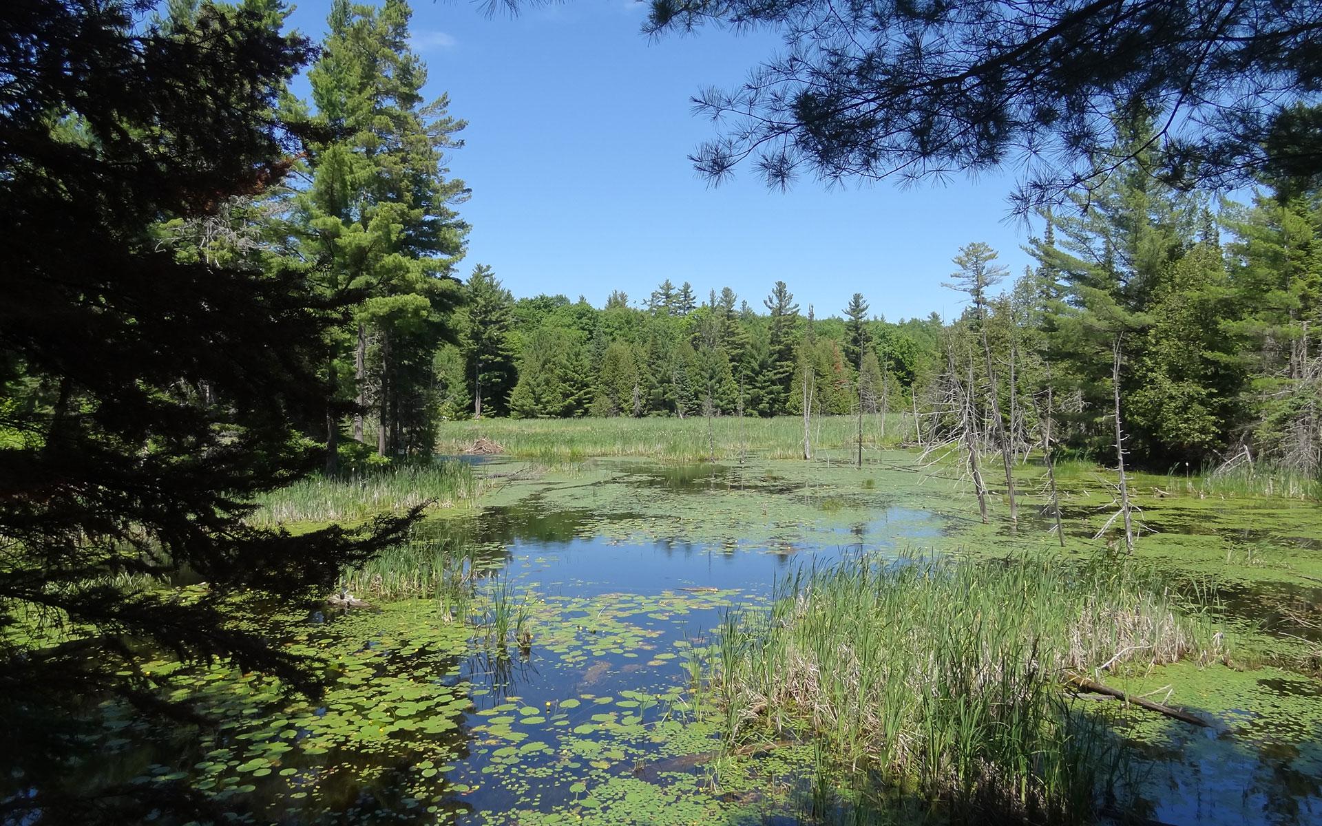 Around the beaver pond
