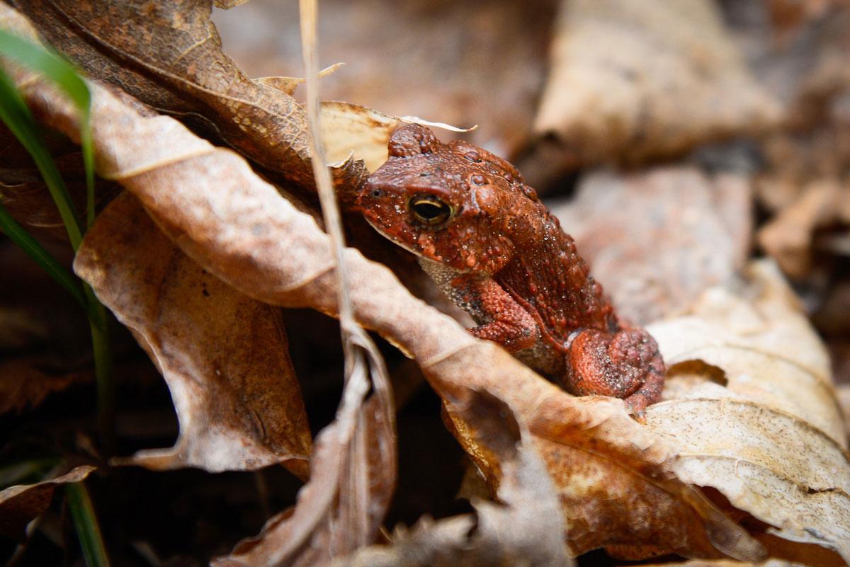 A little froggy friend